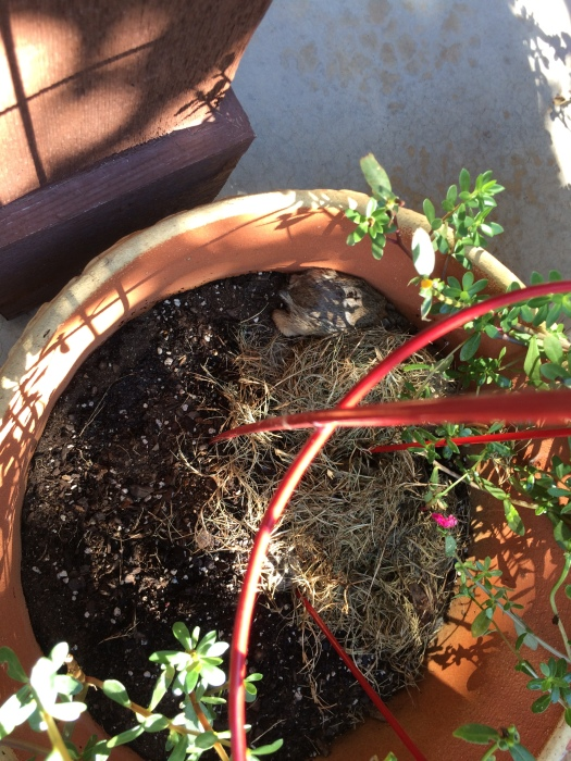 bunny 061117